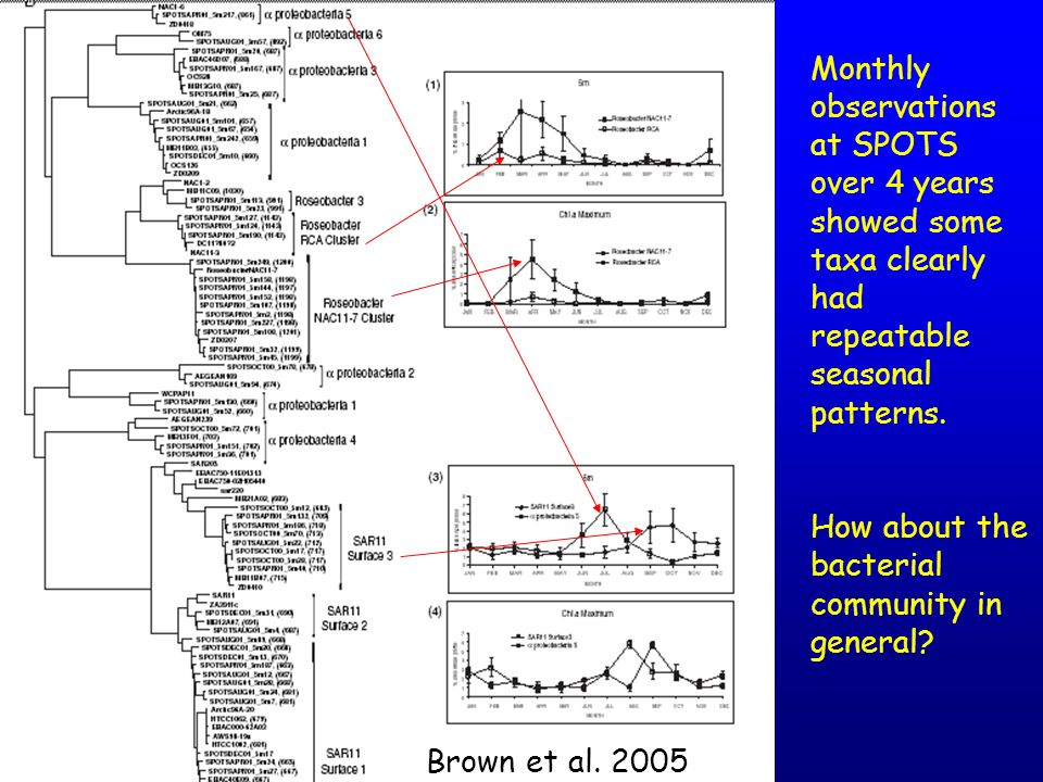 Monthly observations at SPOTS over 4 years showed some taxa clearly had repeatable seasonal patterns.