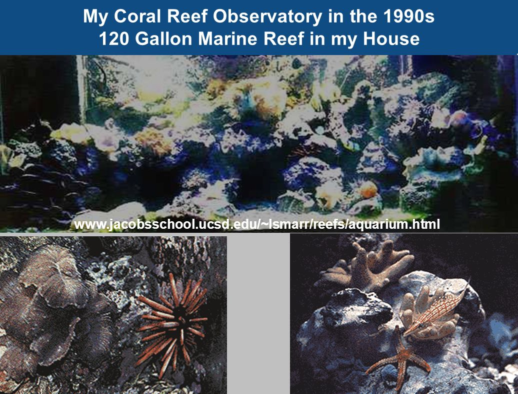 My Coral Reef Observatory in the 1990s 120 Gallon Marine Reef in my House