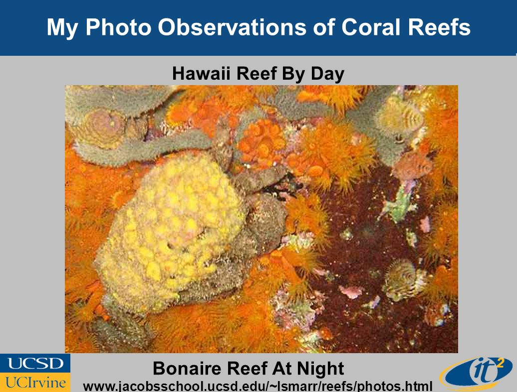 My Photo Observations of Coral Reefs