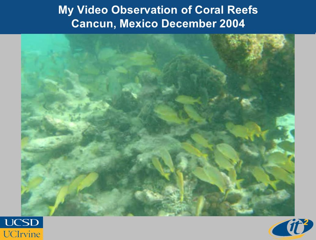 My Video Observation of Coral Reefs Cancun, Mexico December 2004