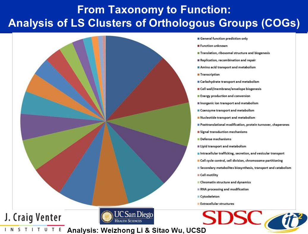 From Taxonomy to Function: Analysis of LS Clusters of Orthologous Groups (COGs)