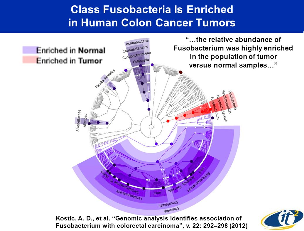 Class Fusobacteria Is Enriched in Human Colon Cancer Tumors