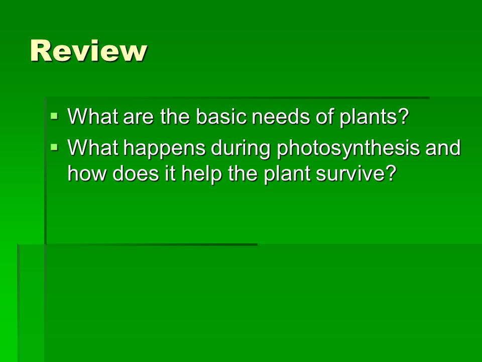 Review What are the basic needs of plants
