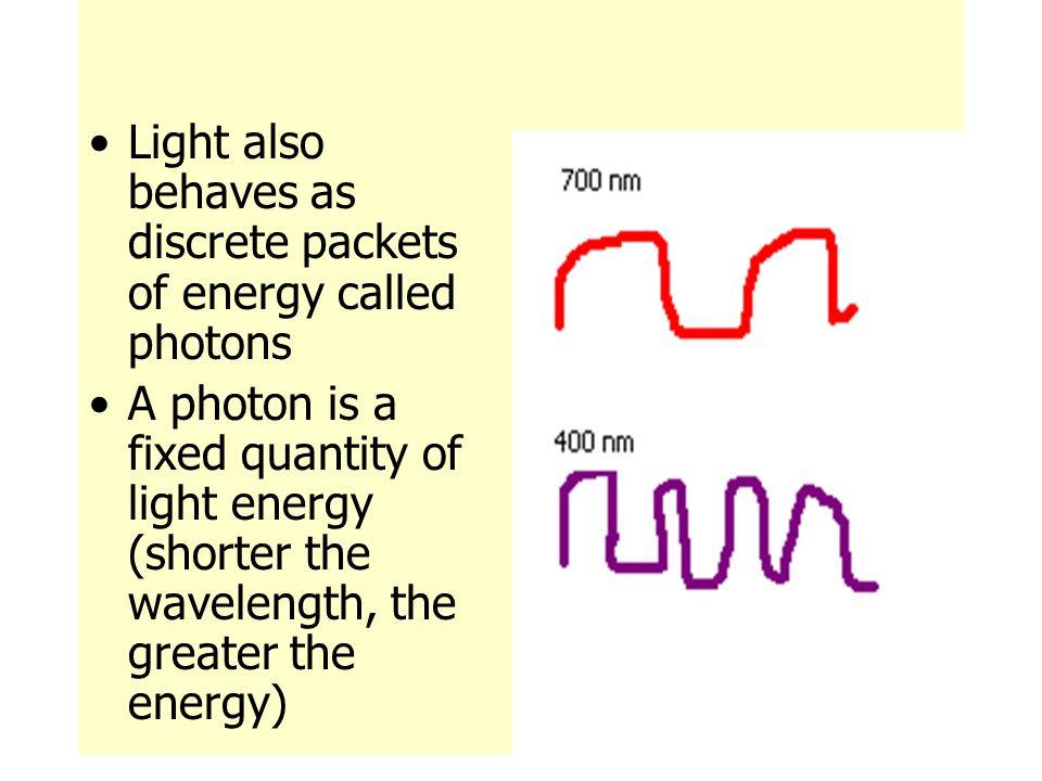 Using Light to Make Food - ppt download