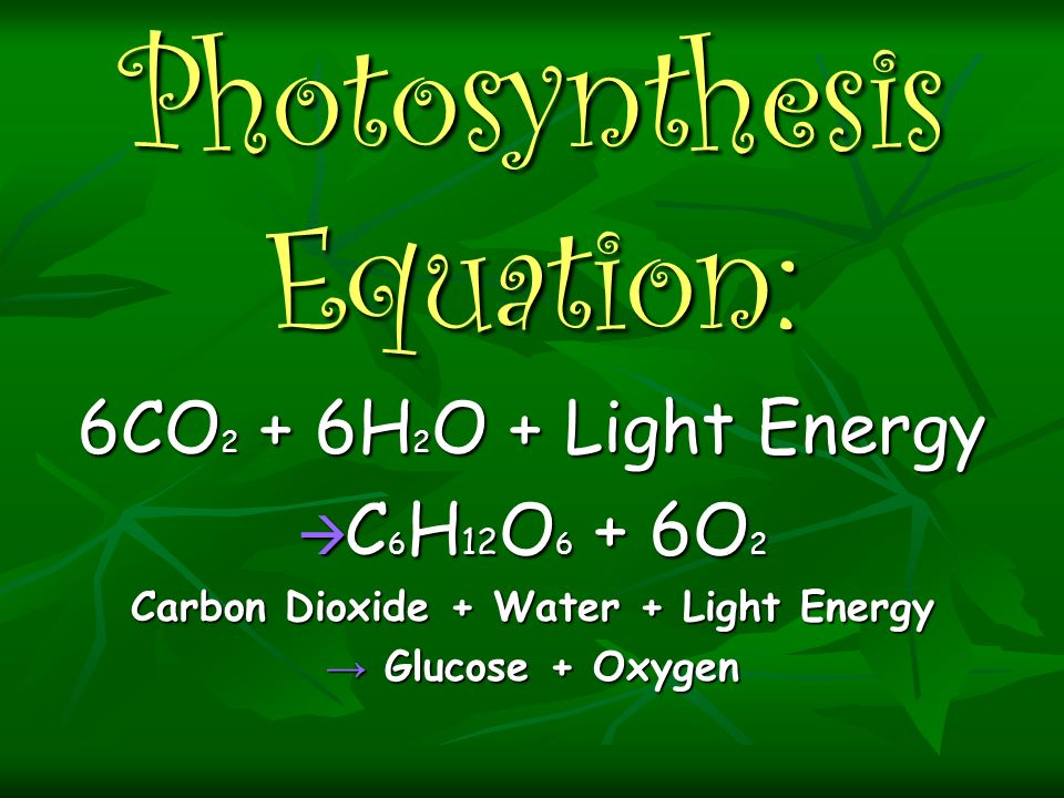 Carbon Dioxide + Water + Light Energy