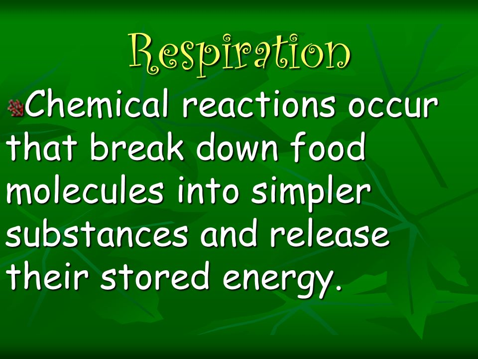 Respiration Chemical reactions occur that break down food molecules into simpler substances and release their stored energy.