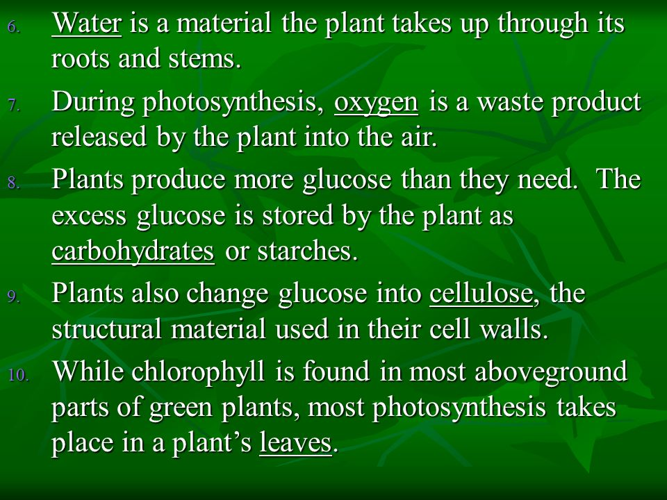 Water is a material the plant takes up through its roots and stems.