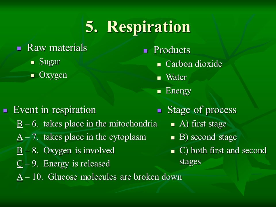 5. Respiration Raw materials Products Event in respiration