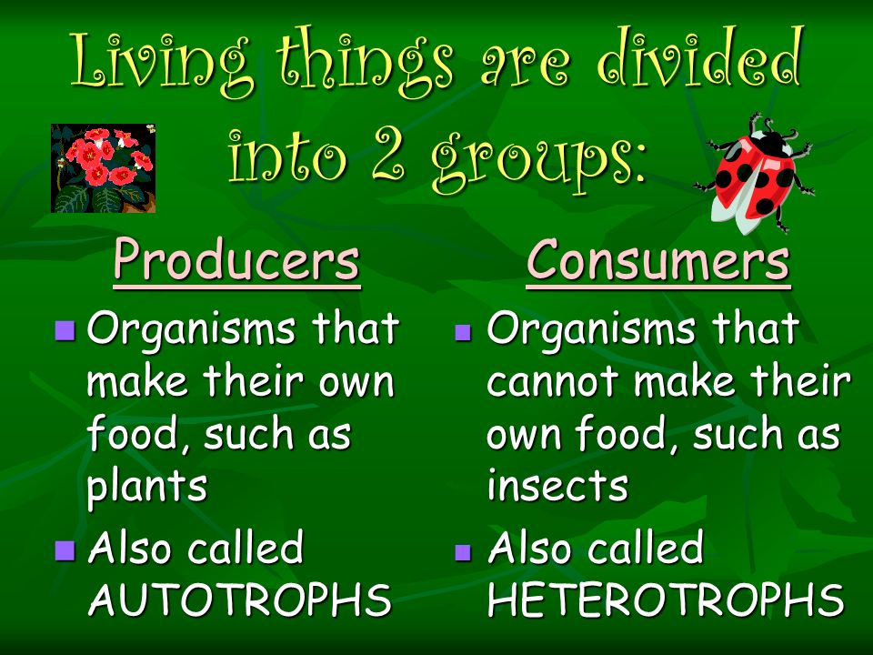Living things are divided into 2 groups: