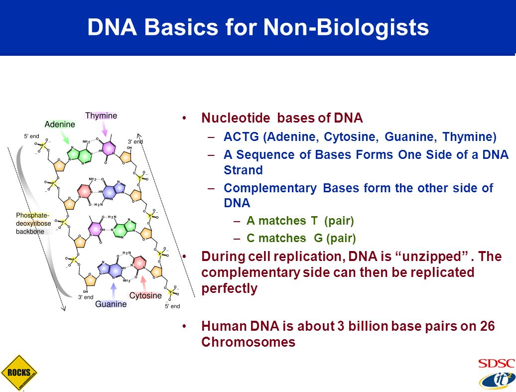 DNA Basics for Non-Biologists