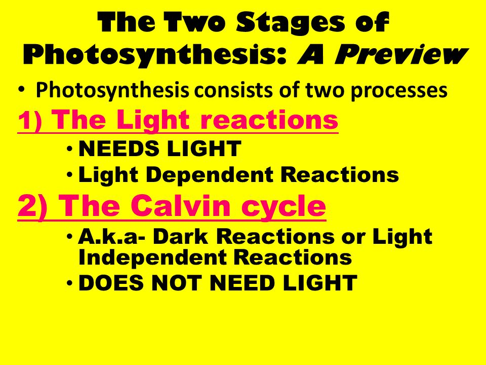 Two stages of photosythesis