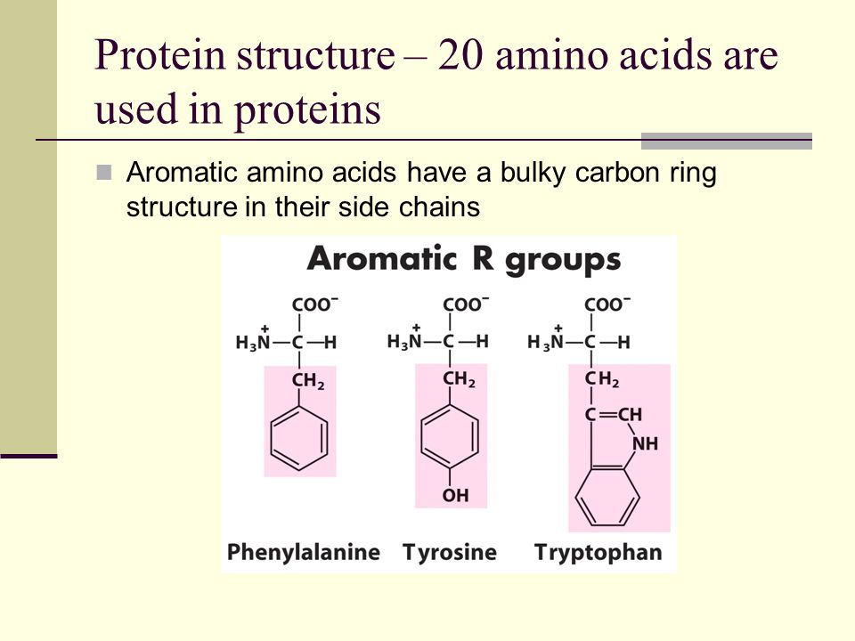 Protein structure – 20 amino acids are used in proteins