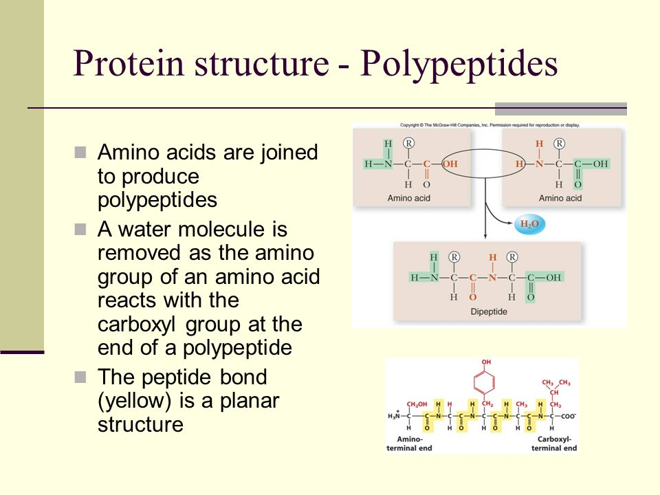 Protein structure - Polypeptides