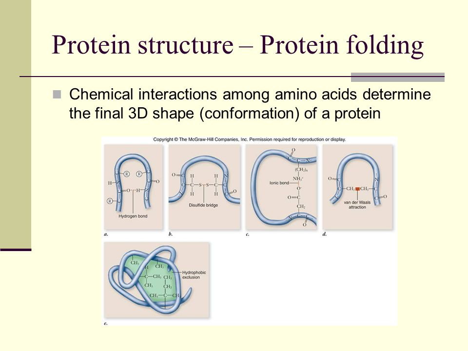 Protein structure – Protein folding