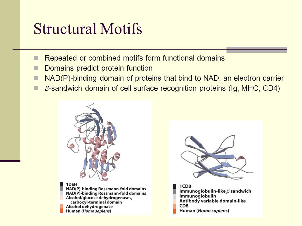 Structural Motifs Repeated or combined motifs form functional domains