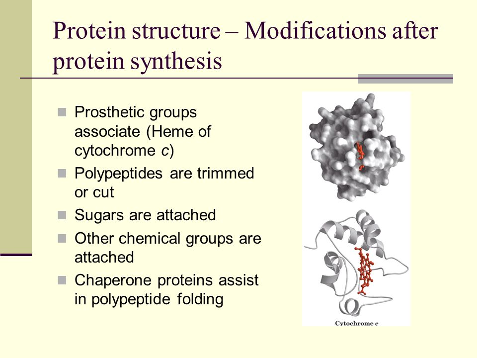 Protein structure – Modifications after protein synthesis