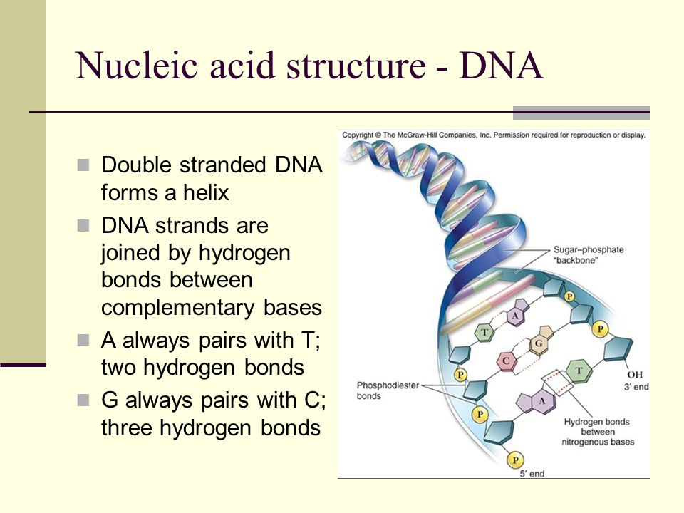 Nucleic acid structure - DNA