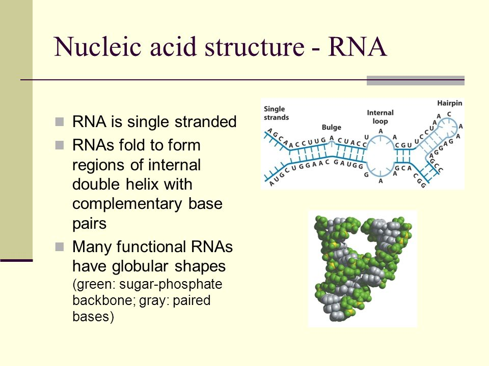 Nucleic acid structure - RNA