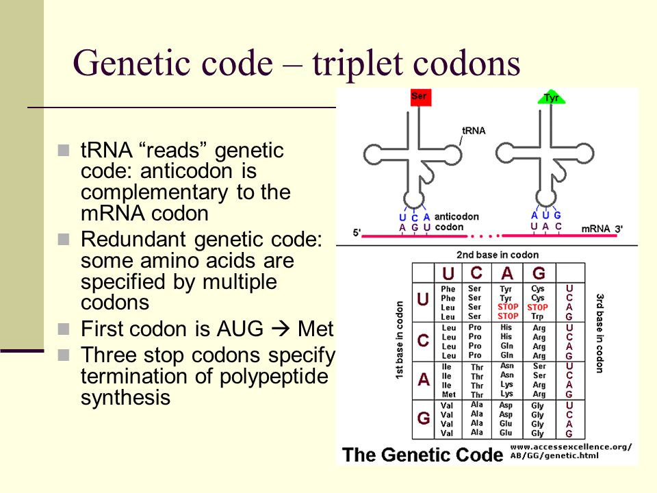 Genetic code – triplet codons