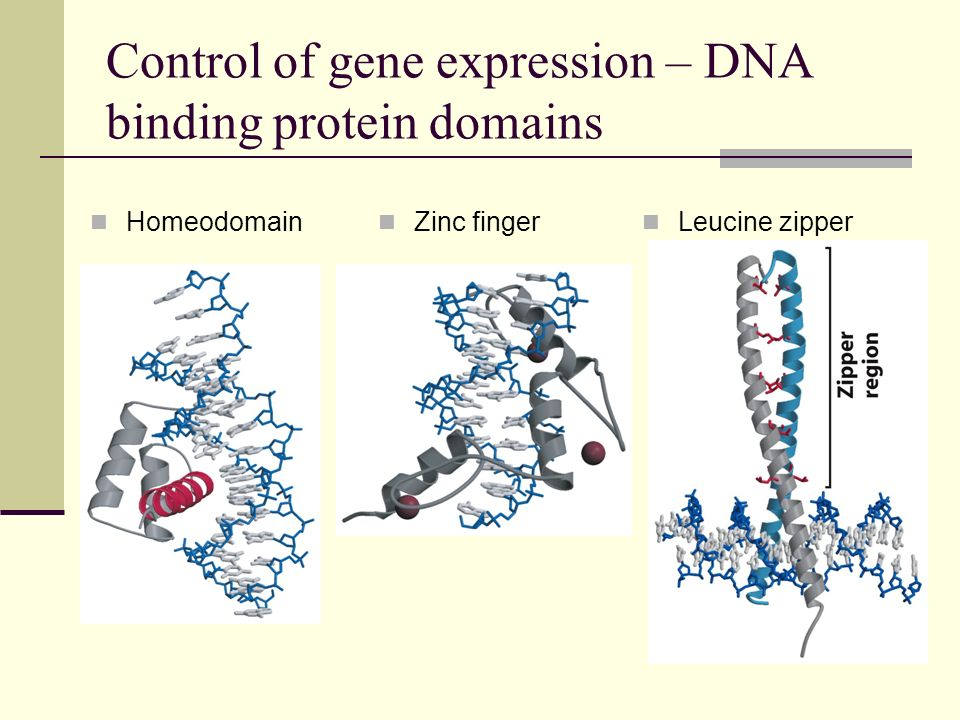 Control of gene expression – DNA binding protein domains