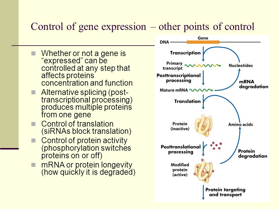 Control of gene expression – other points of control