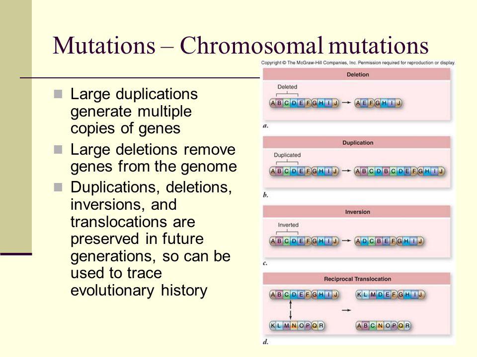 Mutations – Chromosomal mutations