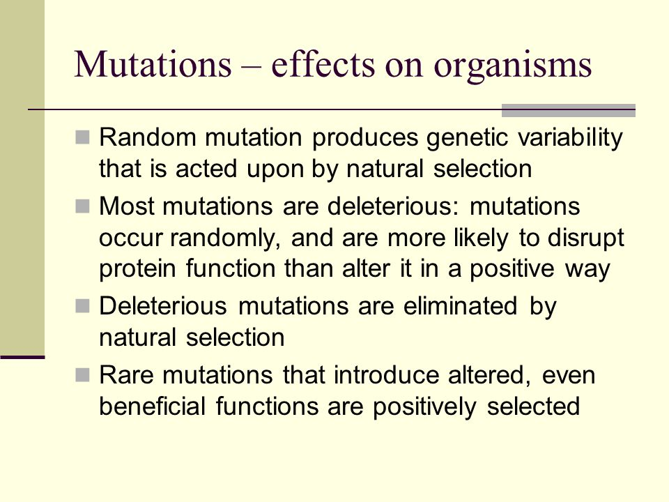Mutations – effects on organisms