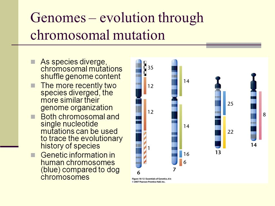 Genomes – evolution through chromosomal mutation