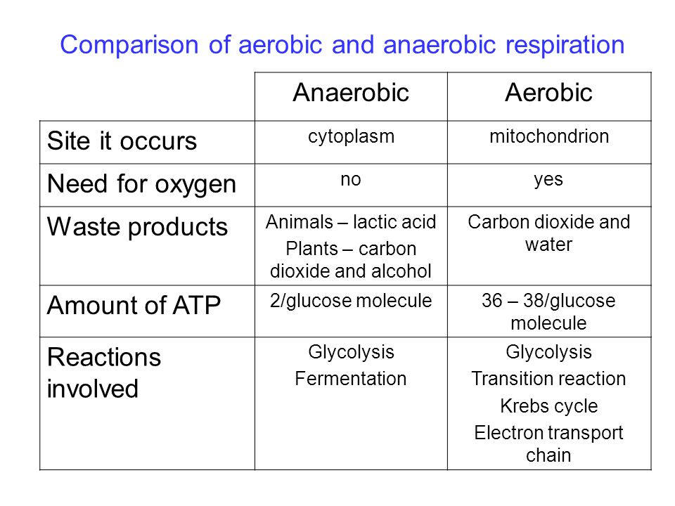 Compare aerobic and anaerobic respiration sport inpiration gallery biology 12 respiration ppt download ccuart Gallery