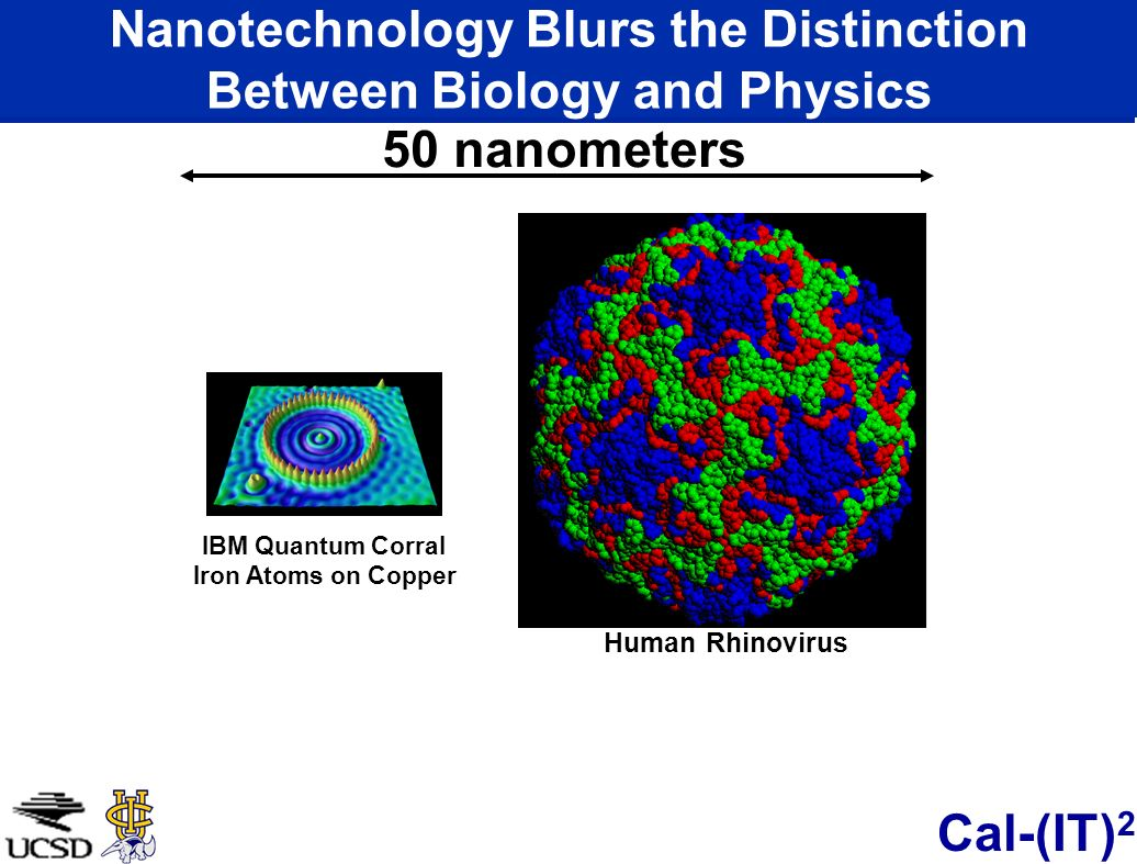 Nanotechnology Blurs the Distinction Between Biology and Physics