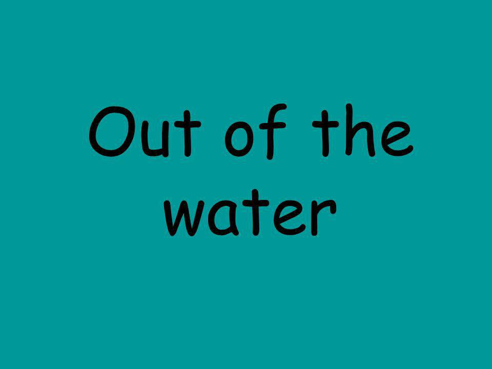 Out of the water