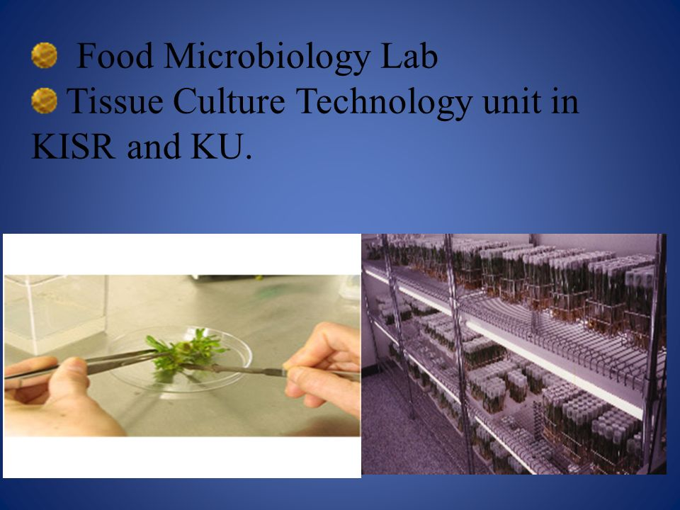 Food Microbiology Lab Tissue Culture Technology unit in KISR and KU.