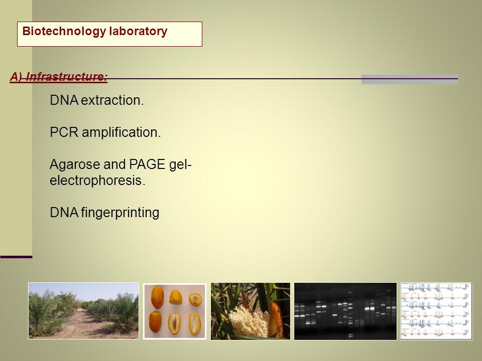 Agarose and PAGE gel-electrophoresis.