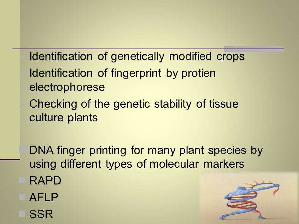 Identification of genetically modified crops