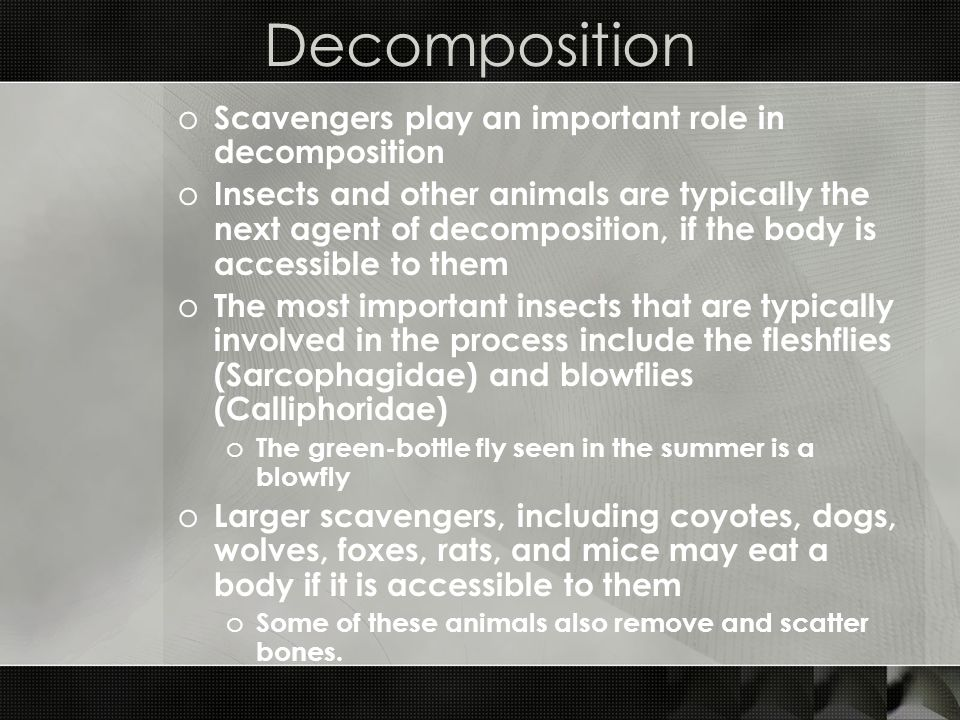 Decomposition Scavengers play an important role in decomposition