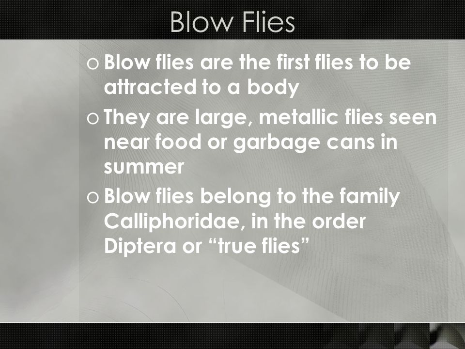 Blow Flies Blow flies are the first flies to be attracted to a body