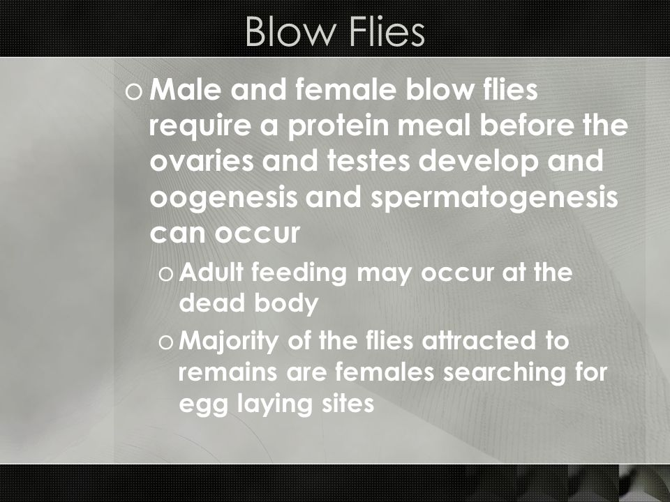 Blow Flies Male and female blow flies require a protein meal before the ovaries and testes develop and oogenesis and spermatogenesis can occur.