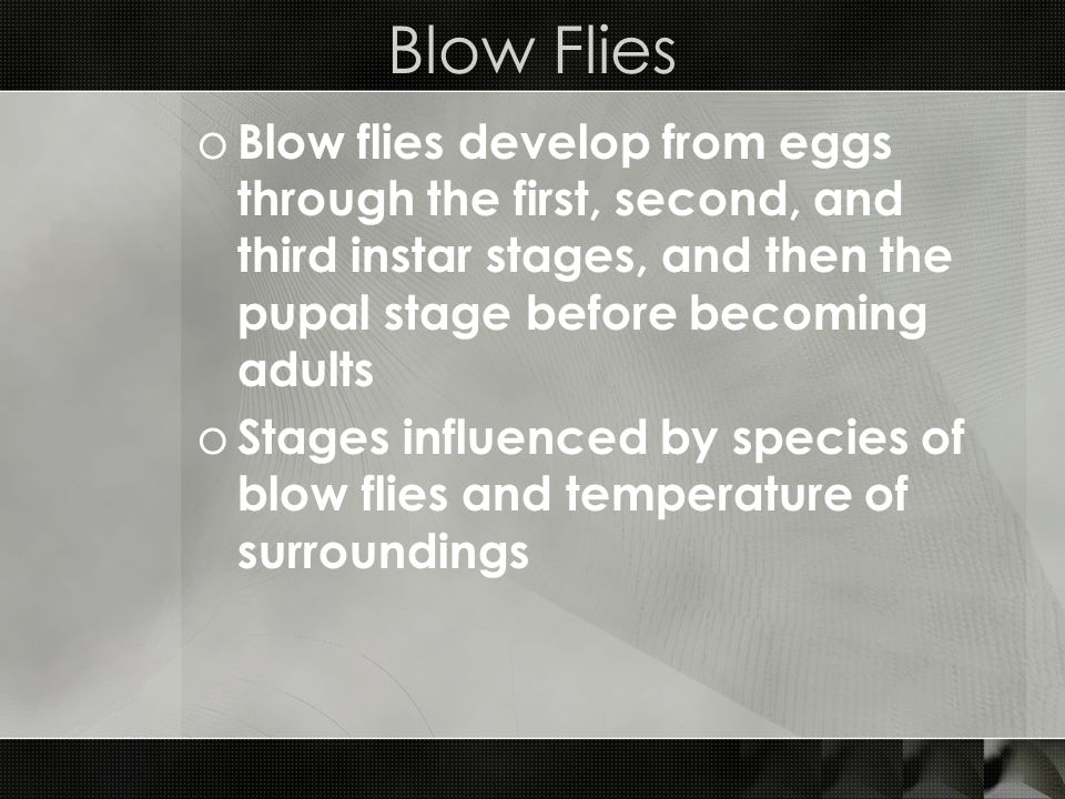 Blow Flies Blow flies develop from eggs through the first, second, and third instar stages, and then the pupal stage before becoming adults.
