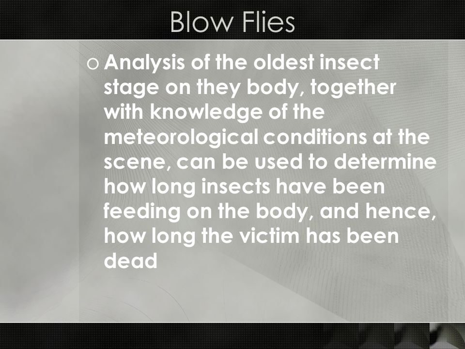 Blow Flies
