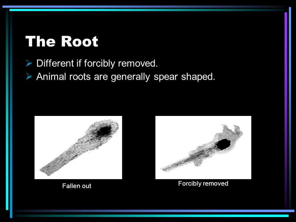 The Root Different if forcibly removed.