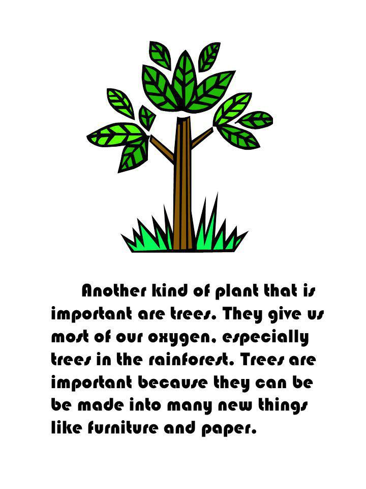 Another kind of plant that is important are trees