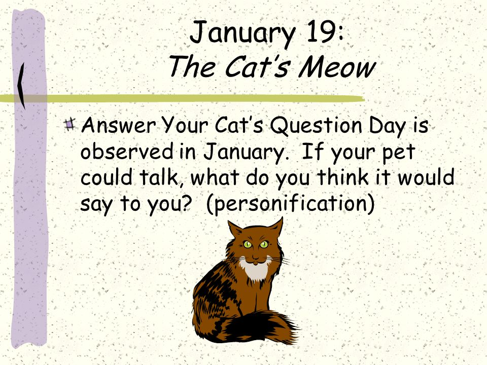January 19: The Cat's Meow