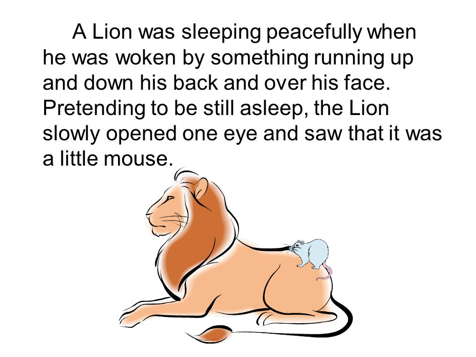 A Lion was sleeping peacefully when he was woken by something running up and down his back and over his face.