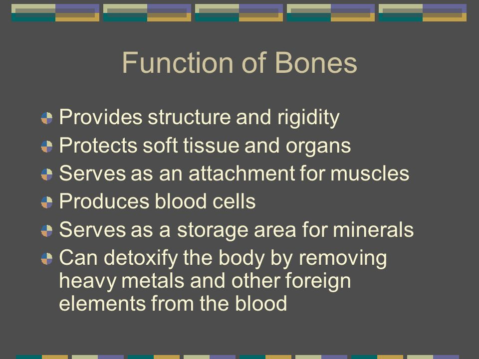 Function of Bones Provides structure and rigidity