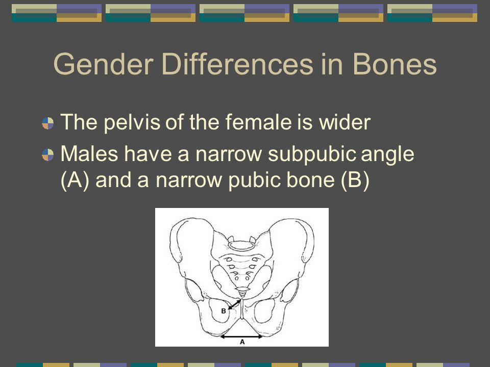 Gender Differences in Bones