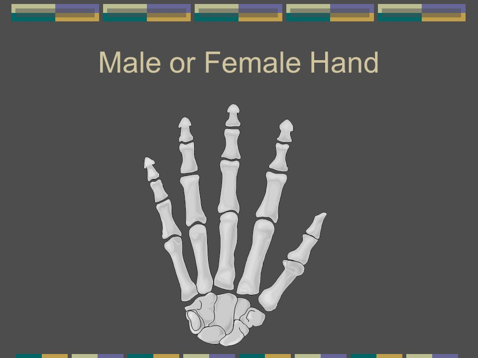 Male or Female Hand