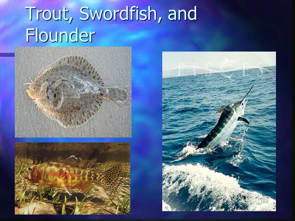 Trout, Swordfish, and Flounder