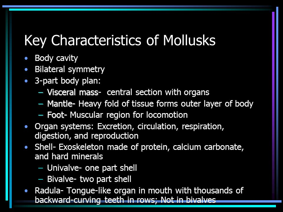 Key Characteristics of Mollusks