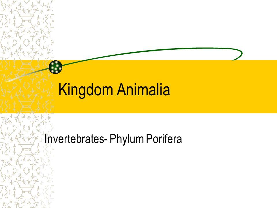 Invertebrates- Phylum Porifera