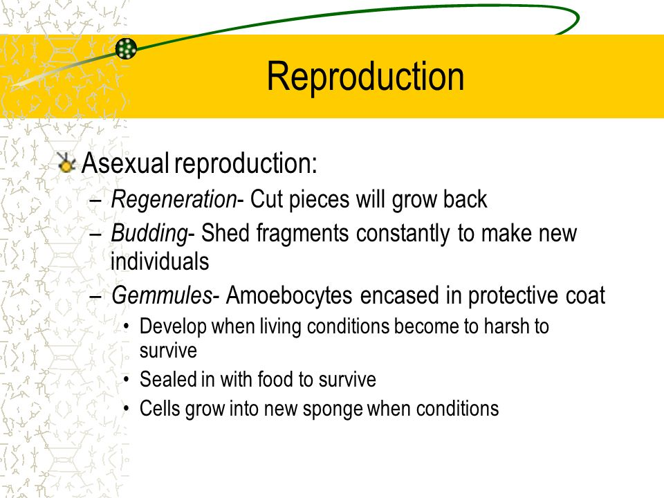 Reproduction Asexual reproduction: